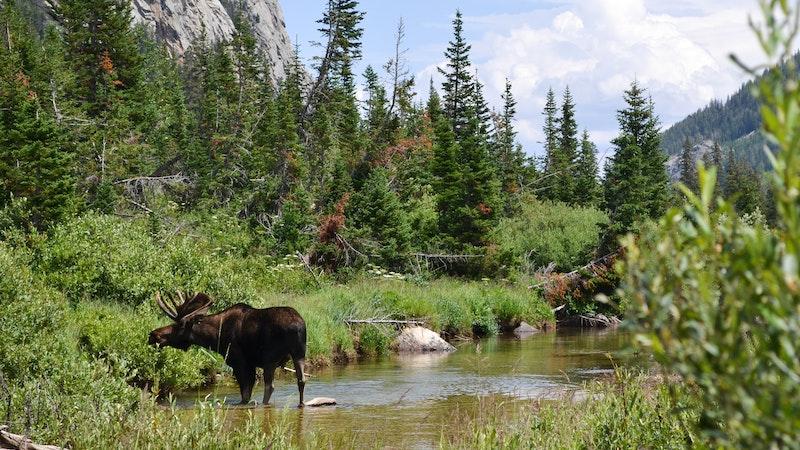 Moose grazing.jpg?ixlib=rails 2.1