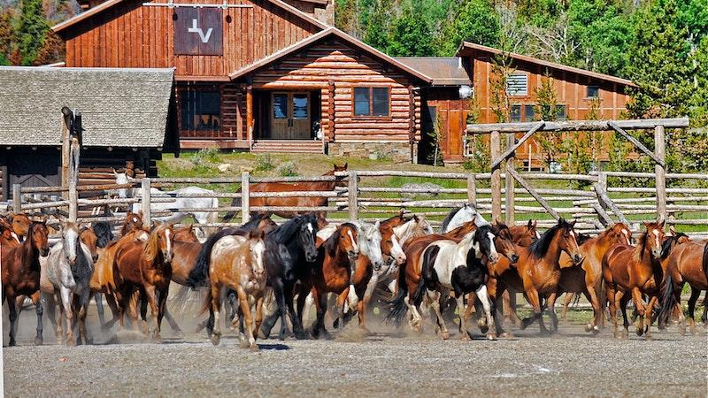 Horse paddock at the ranch.jpg?ixlib=rails 2.1