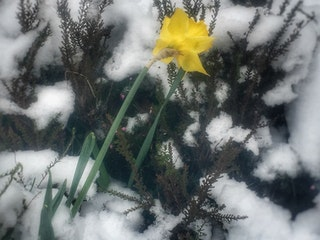 Snow flower.jpg?ixlib=rails 2.1