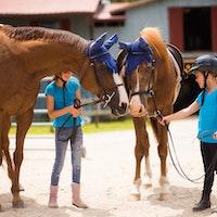 Training horses at keystone camp for girls.jpg?ixlib=rails 2.1