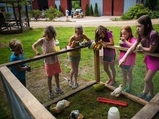 Chickens at keystone camp for girls.jpg?ixlib=rails 2.1
