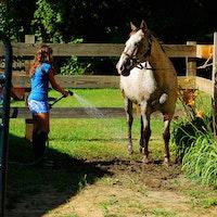 Girl washing horse at camp.jpg?ixlib=rails 2.1