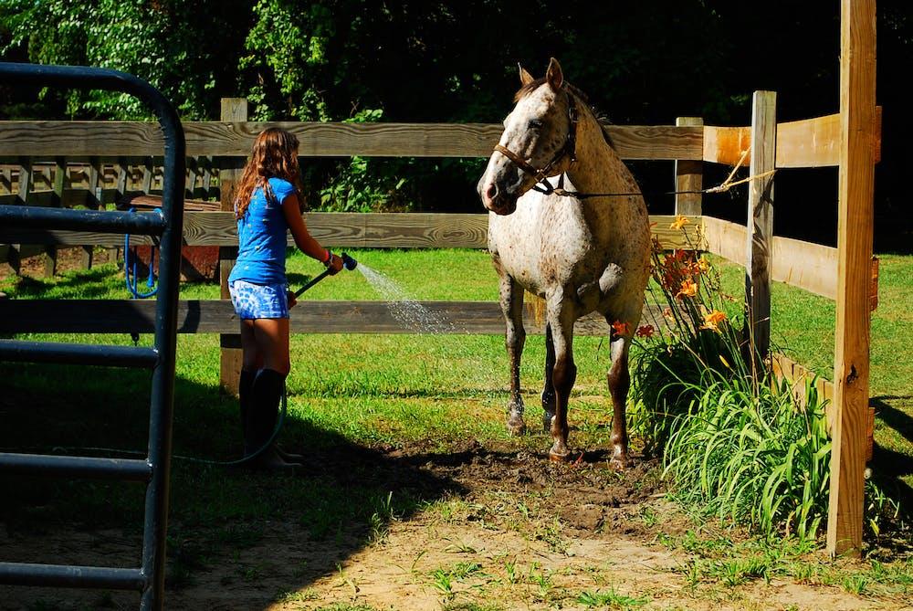 Michigan girls camp horse.jpg?ixlib=rails 2.1