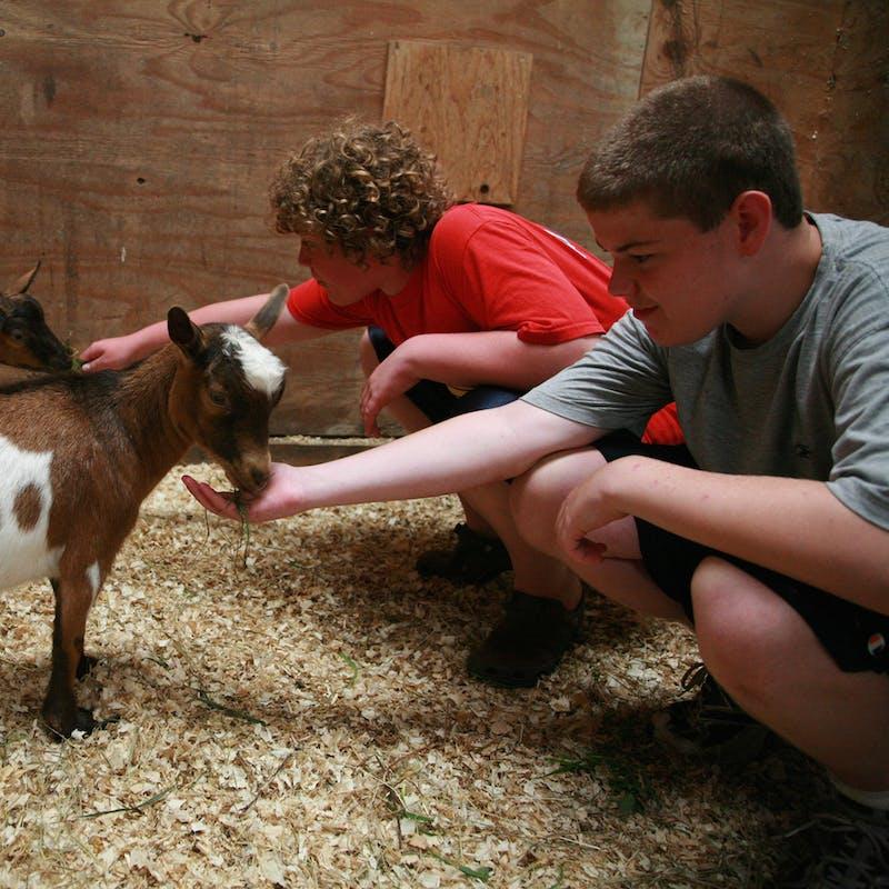 Great camp jobs best summer animal care jobs 2.jpg?ixlib=rails 2.1