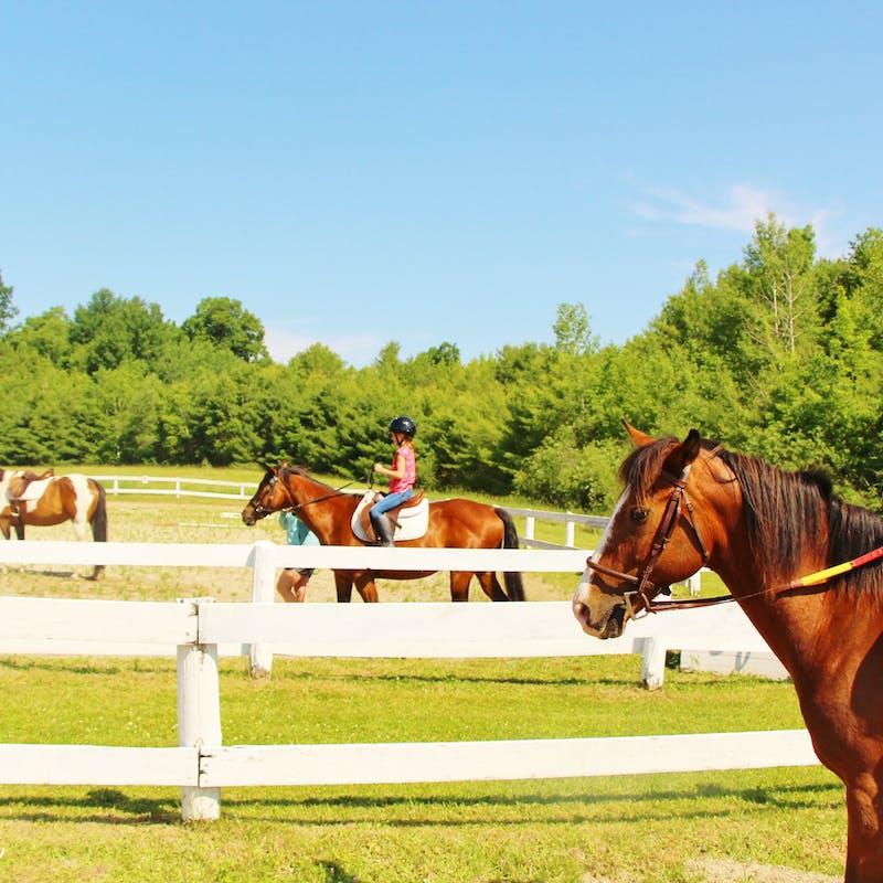 Great camp jobs best summer camp horseback riding jobs 3.jpg?ixlib=rails 2.1