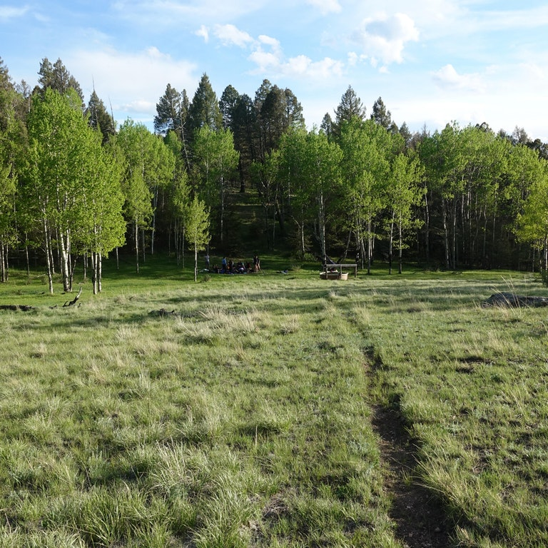 Interconnectedness and Resilience: Lessons from an Aspen Grove