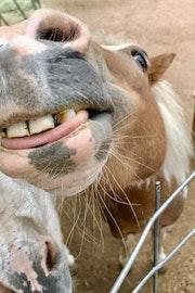 Sauce smile tongue.jpg?ixlib=rails 2.1