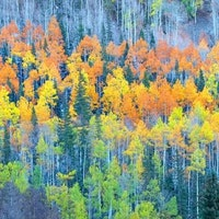 Aspen leaves change color min.jpg?ixlib=rails 2.1
