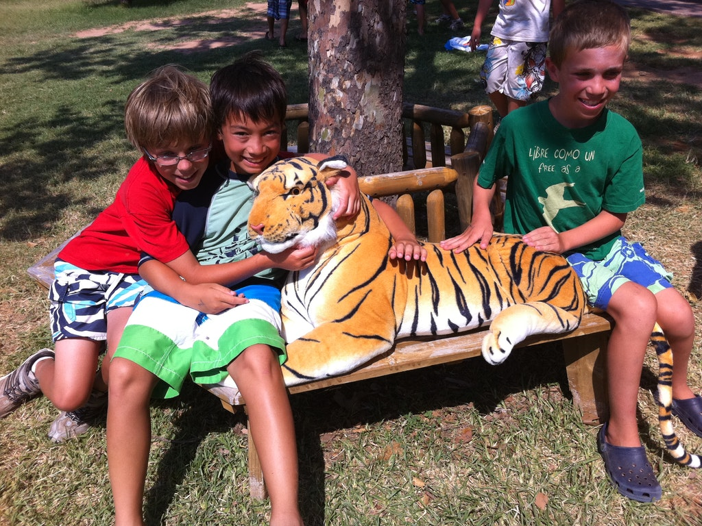The Tiger and The Cub