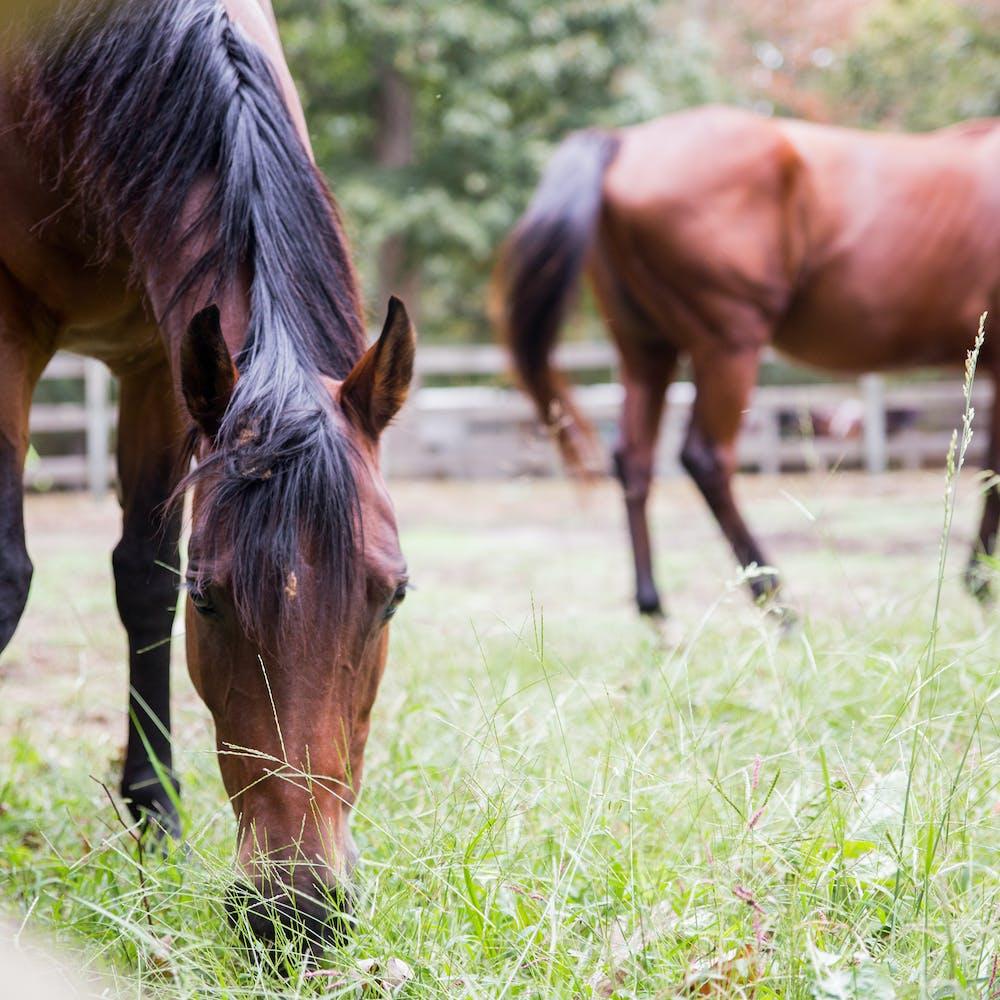 Horses.jpg?ixlib=rails 2.1
