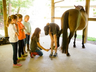 Horse care at highlander coed summer camp north carolina.jpg?ixlib=rails 2.1