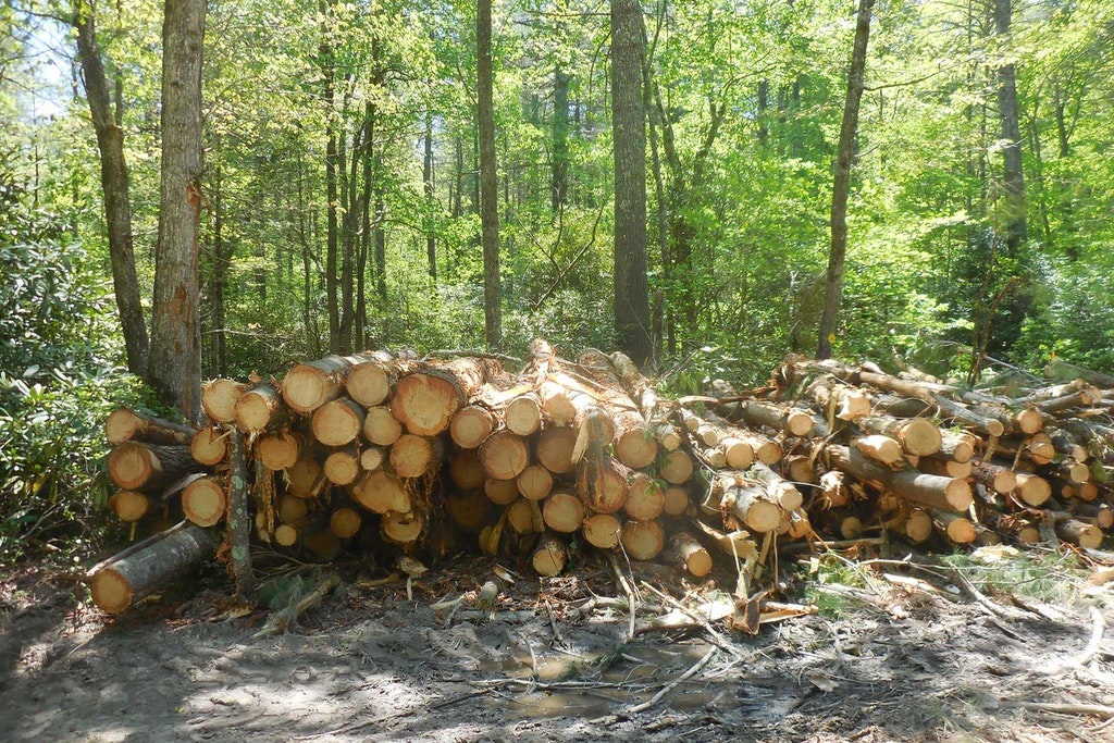 Logging Project At GRP