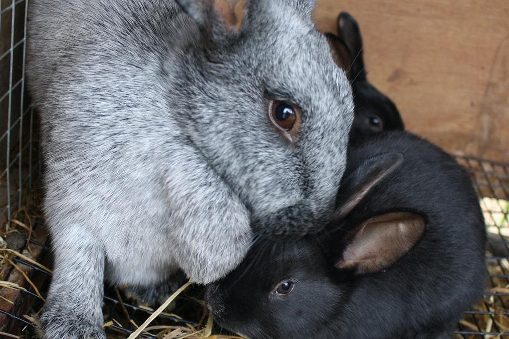 Baby bunnies!!