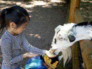 Feeding the billy goat.jpg?ixlib=rails 2.1