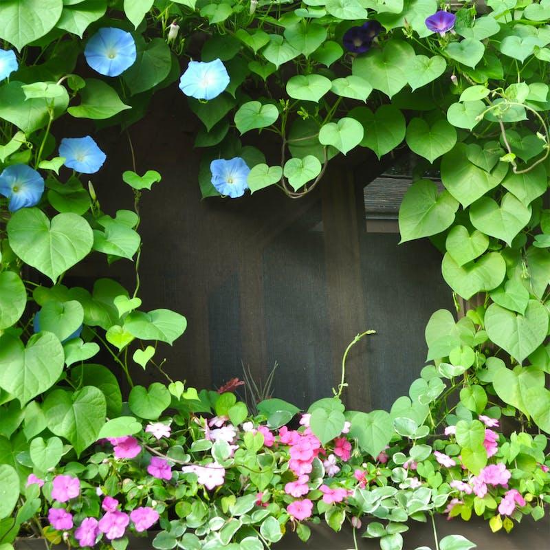 Growing ivy at camp pinecliffe.jpg?ixlib=rails 2.1